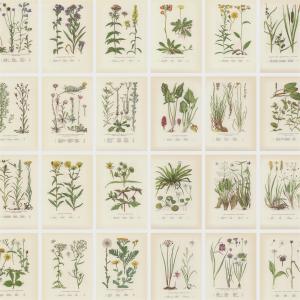 Botanica digitaal behang beige