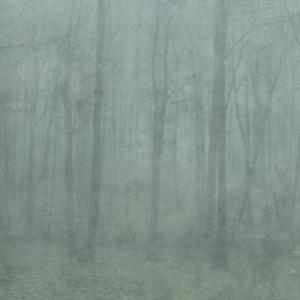 Skog digitaal behang groen