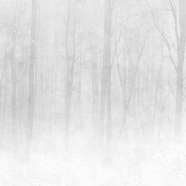 Vinterskog digitaal behang wit