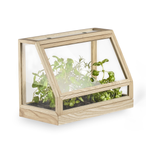 Greenhouse mini essenhout